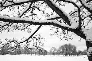 Winter Wonderland 9, Photograph by Jazamin Sinclair