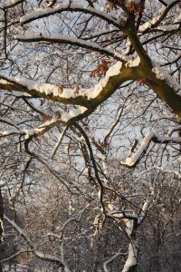 Winter Wonderland 6, Photograph by Jazamin Sinclair