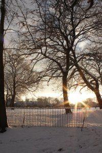 Winter Wonderland 1, Photograph by Jazamin Sinclair