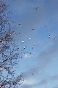 Winter Wonderland 2, Photograph by Jazamin Sinclair