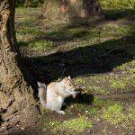 Squirrel 1: Digital Photograph; Limited Edition A4 Digital Print (1/15); £25.00 Unframed/ £40.00 Framed. Framed size: 43cm x 33cm.