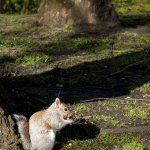 Squirrel 2: Digital Photograph; Limited Edition A4 Digital Print (1/15); £25.00 Unframed/ £40.00 Framed. Framed size: 43cm x 33cm.
